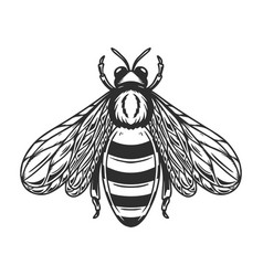 Bee in engraving style on white background design vector
