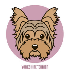 portrait of yorkshire terrier vector image