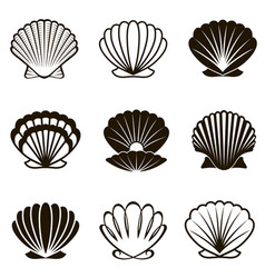 set seashells vector image