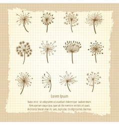 Vintage botanical poster with dandelion vector
