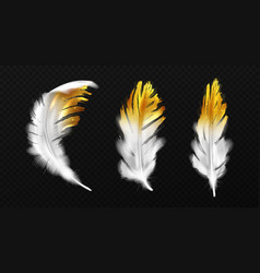 white feathers with gold glitter on edges plumage vector image