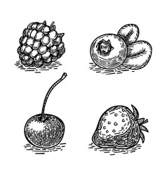 Berries sketch engraving style vector