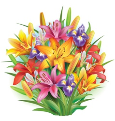 bouquet lilies and irises vector image