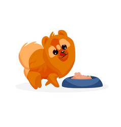chow puppy vector image