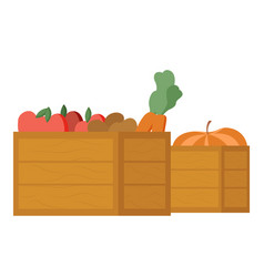 healthy ingredients harvested veggies in boxes vector image
