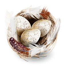 Realistic nest eggs and feathers vector