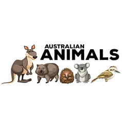 Wild animals from australia vector