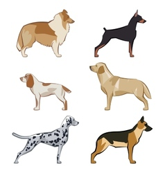 Dogs icons set vector image vector image