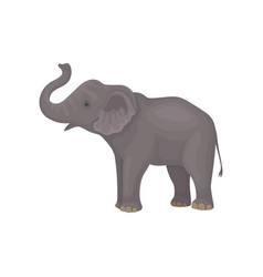 Cute gray elephant standing isolated on white vector
