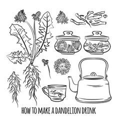 dandelion drink how make pharmacy vector image