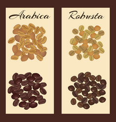 Types coffee beans vector