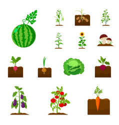 plant vegetable cartoon icons in set collection vector image