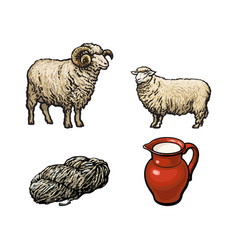 sketch ram cutted wool sheep milk jug vector image vector image