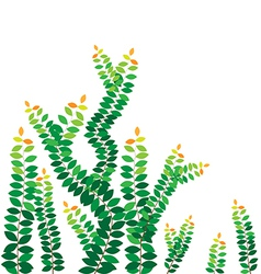 Green leaves on the wall vector image