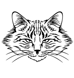 Harmful cat vector