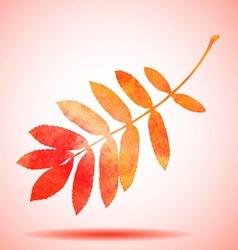 Orange watercolor painted rowan tree leaf vector image vector image