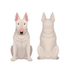 Front and back view of sitting bull terrier dog vector