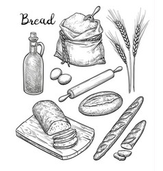 ingredients and bread set vector image