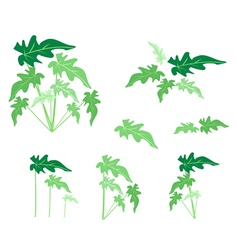 A Set of Philodendron Leaves on White Background vector