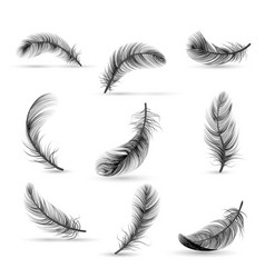 Realistic feather black icon set vector