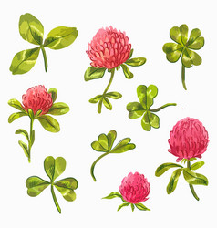 watercolor clover set beautiful spring floral vector image