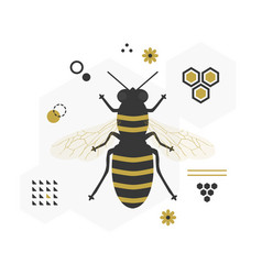 black and golden top view flying honey bee icon vector image