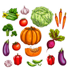 Vegetable and farm market veggies sketches vector
