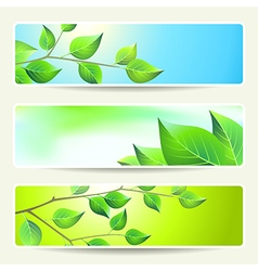 leaves banners empty spring vector image