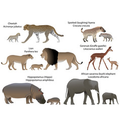 animals of africa with cubs vector image