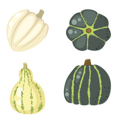 fresh orange pumpkin decorative seasonal ripe food vector image vector image