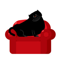 fat black cat on red armchair home pet on chair vector image