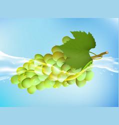 Tasty ripe grape in clean water vector