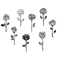 Rose flowers set isolated on white background vector image vector image
