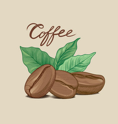 coffee bean leaves handwritten lettering drink vector image