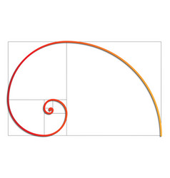 fibonacci spiral eps 10 vector image