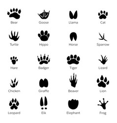 different footprints birds and animals vector image