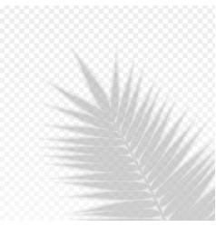 palm branch leaf overlay effect transparent shadow vector image
