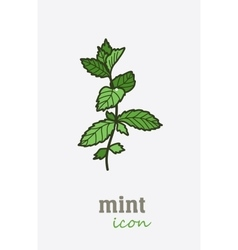 Mint icon Vegetable green leaves vector image