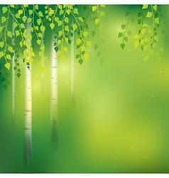 Birch background vector image