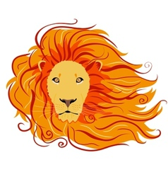 lion wild vector image