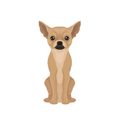 Portrait of cute chihuahua puppy small dog with vector