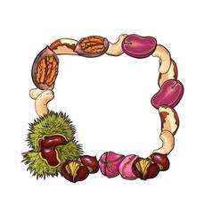 square frame of walnut coconut cashew kola vector image
