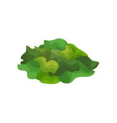 Pile of raw spirulina seaweeds green algae vector