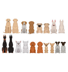 set of dogs of different breeds front and back vector image