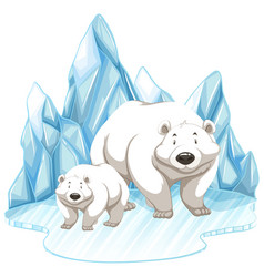 two polar bears on iceberg vector image