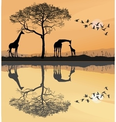Savana with giraffes vector image vector image