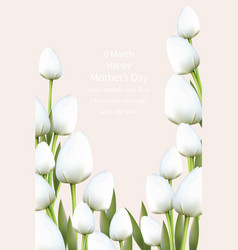 white tulips flowers blossom vector image vector image