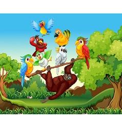 Wild birds and urangutan in the forest vector image vector image