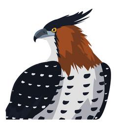 Beautiful hawk majestic bird vector