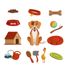 different accessories for domestic pet dog vector image
